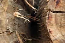 Hidden Logs.72dpi
