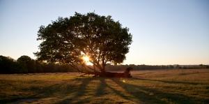 Richmond Park 2012