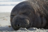 Seal060314_2