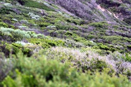 Southern Bush Land.72dpi