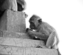 Monkey Village