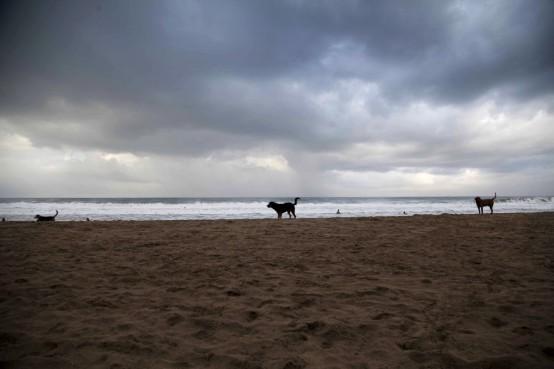Sloth Beach140114_20