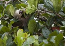 Sloth Beach140114_23