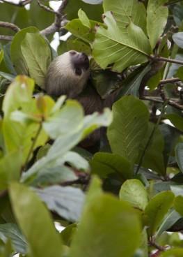 Sloth Beach140114_24