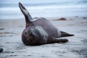 Seal Hello