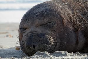Cardiff Seal