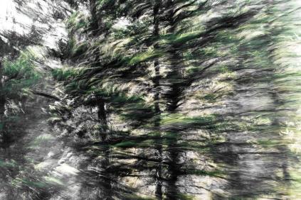 Redwoodsmall2-11