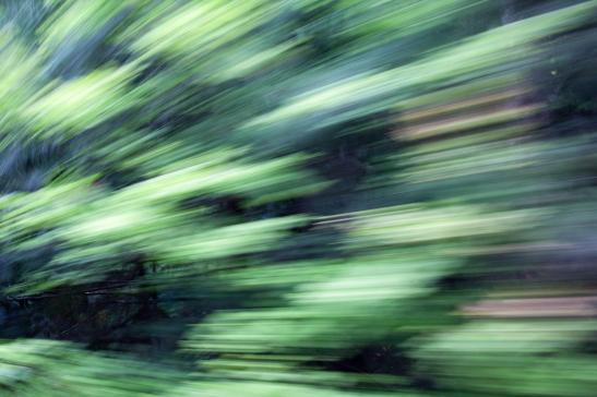 Redwoodsmall2-16
