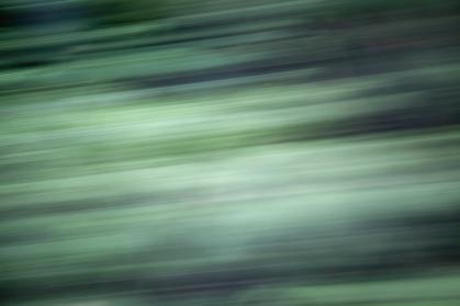 Redwoodsmall2-17