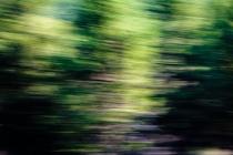 Redwoodsmall2-181214