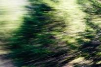 Redwoodsmall2-2