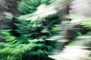 Redwoodsmall2-21