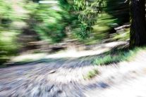 Redwoodsmall2-23