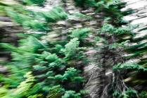 Redwoodsmall2-24