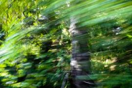 Redwoodsmall2-25