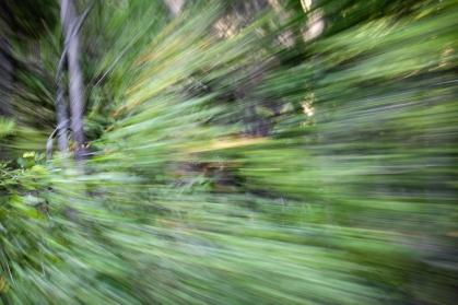 Redwoodsmall2-27