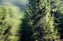 Redwoodsmall2-3