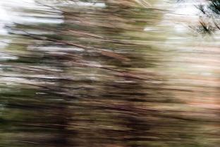 Redwoodsmall2-31