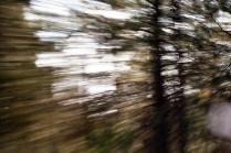 Redwoodsmall2-32