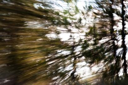 Redwoodsmall2-33