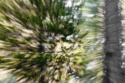 Redwoodsmall2-34