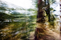 Redwoodsmall2-35