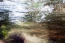 Redwoodsmall2-39