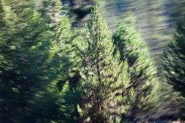 Redwoodsmall2-4