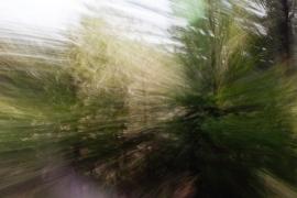 Redwoodsmall2-42
