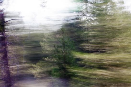 Redwoodsmall2-47