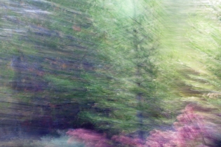 Redwoodsmall2-52