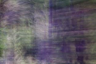 Redwoodsmall2-53