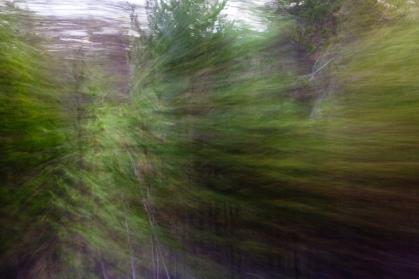 Redwoodsmall2-56